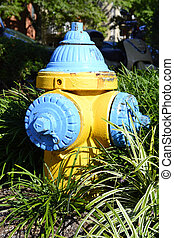 Blue and Yellow Fire Hydrant