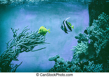 Blue and yellow fish under water, analog filter