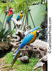 blue and yellow macaw bird s