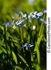Blue asterisk in a meadow