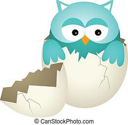 Blue Baby Owl in Egg