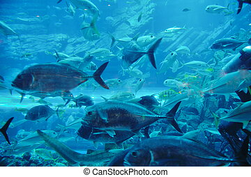 aquarium with fishes and reef - blue background ocean...