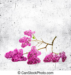 Blue background with lilac flowers. Vintage floral background for any of your design