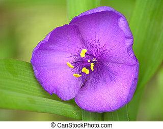 Blue beautiful flower