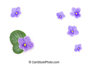 Blue beautiful flowers isolated on white background