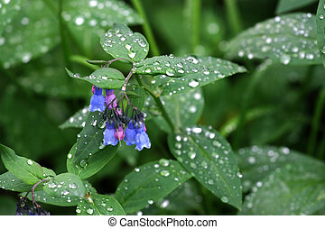 Blue Bells With Raindrops