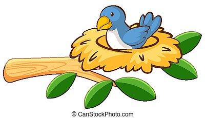 Blue bird in the nest