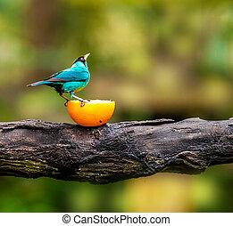 Blue bird sitting on a branch, wildlife