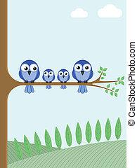 blue birds  - Family of blue birds sat on a tree branch