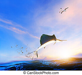 blue ,black marlin fish jumping to mid air over blue sea and...