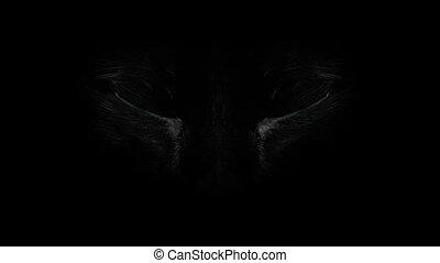 Blue blinkng Cat eyes