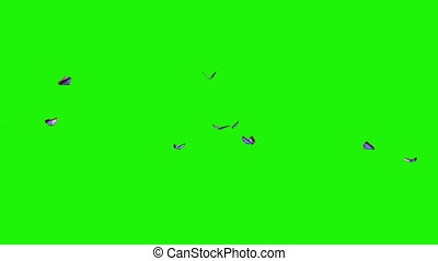 blue butterflies - small swarm on green screen - you can put...