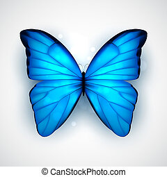 Blue butterfly - Butterfly with big blue wings on white ...