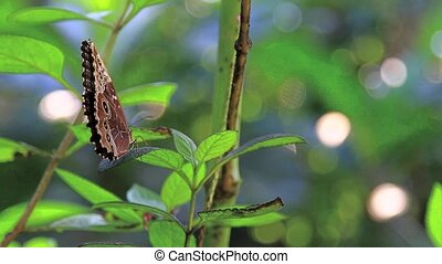 Blue Butterfly Costa Rica