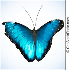 Blue Butterfly. EPS8 vector