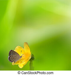 Blue butterfly fly in morning natur