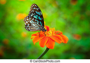 Blue butterfly fly