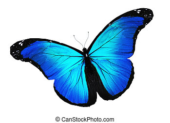 blue butterfly illustrations and stock art 23 095 blue butterfly rh canstockphoto com free blue butterfly clipart cute blue butterfly clipart