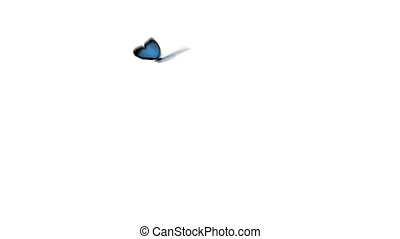 blue butterfly flying arround with alpha channel at the end of the clip