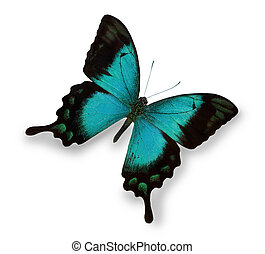 Blue butterfly isolated on white
