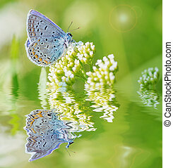 Blue butterfly on a white flower