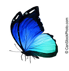 Blue butterfly on white background