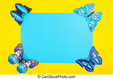Blue butterfly on yellow background with blue paper with copy space in center