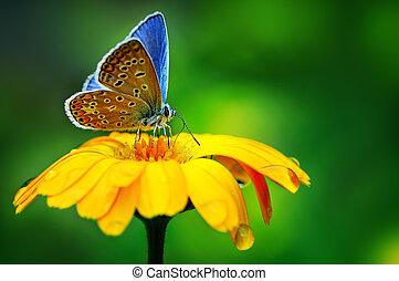 blue butterfly on yellow flower