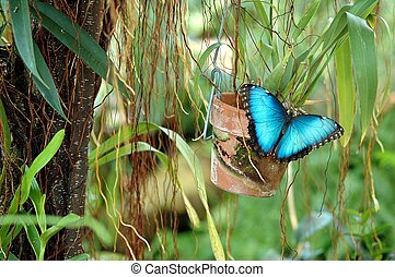 Photographed a Blue Morpho butterfly at a local garden in Florida.