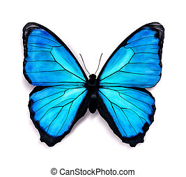 Blue butterfly with soft shadow on a white background