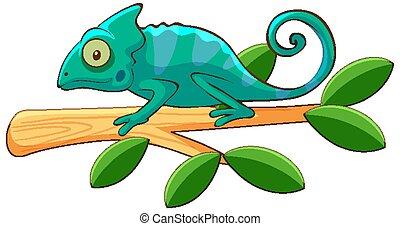 Blue cameleon on branch