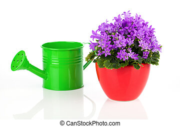 blue campanula flowers with watering can, on white background