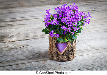 blue campanula flowers wooden background