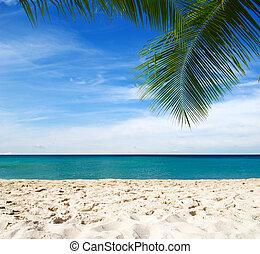 blue caribbean sea beach