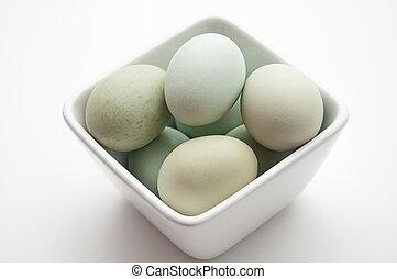 Blue chicken eggs