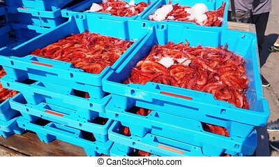 Blue containers with catch of sea shrimps - Blue plastic...