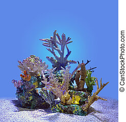 Blue Coral Reef Isolated Under Water - A blue underwater...