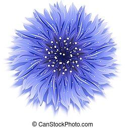 Blue cornflower on white. background Vector illustration.