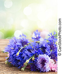 Blue cornflowers on white