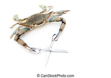 Blue crab holding a scissors