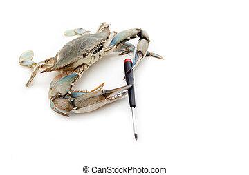 Blue crab holding a screwdriver