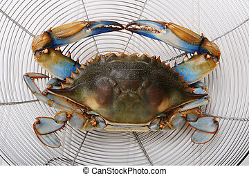 Blue Crab - Maryland Blue crab from the Chesapeake Bay.