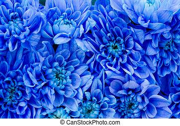 Blue Dahlia - Closeup Photo Of Dahlia Blue Flowers