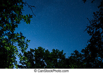 Blue dark night sky with many stars above field of trees....