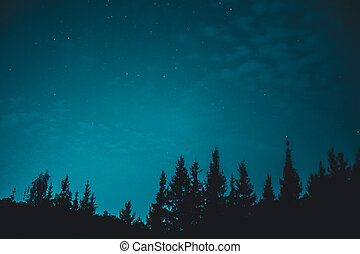 Blue dark night sky with many stars above field of trees