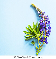 Blue delphinium flowers on a bright blue background