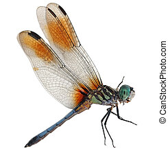 Blue Dragonfly - Single Bule dragonfly isolated on white...