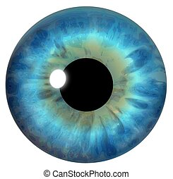 Illustration of the iris of a blue eye.
