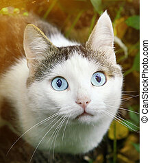 cat hunting close up portrait