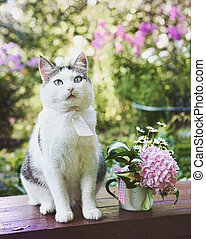 blue eyed cat with hydrangea pink bouquet close up